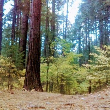 fall trail 2