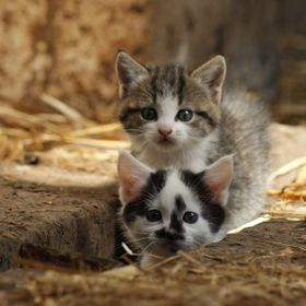 Two barn kittens pop out from under the timber floor