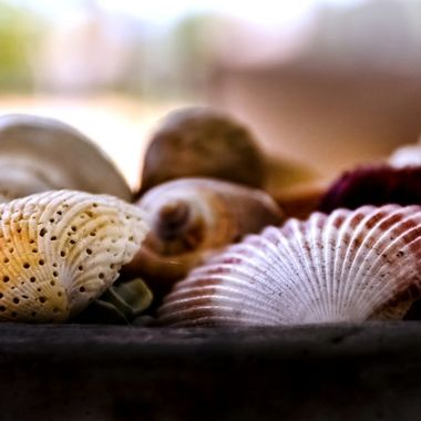 Seashells from the Beach NW