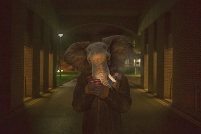 We are not Elephants - Lungs