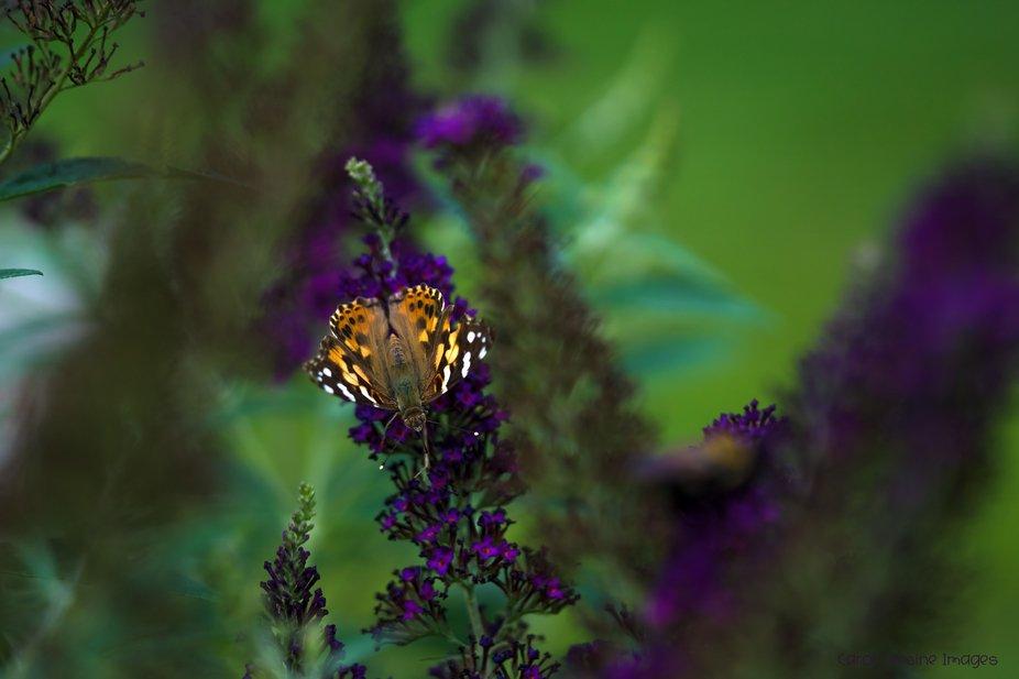 DSC05365 Butterfly Looking Up