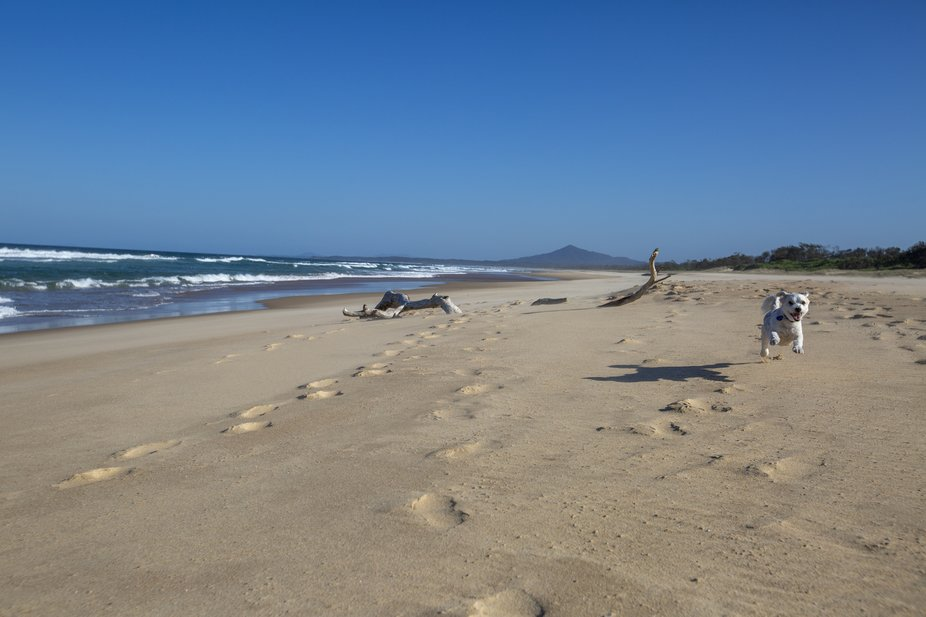 Taken at Myleston Beach in NSW Australia. My little model is my cute dog who decided to run to me...