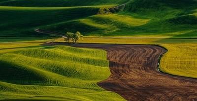 A tree in the beautiful field