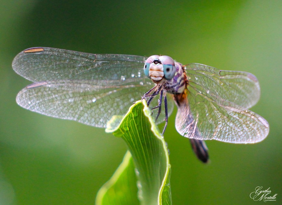 The cutest little dragonfly after the rain.  His face!!