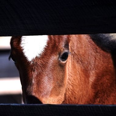 Peek a Boo Filly NW