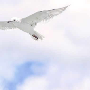 Seagull Flies NW
