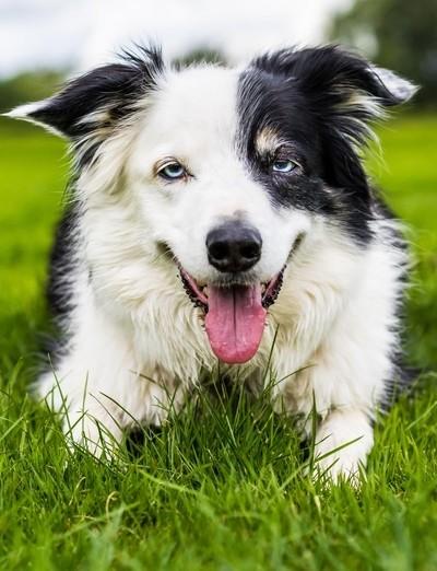This is Mac, love his eyes