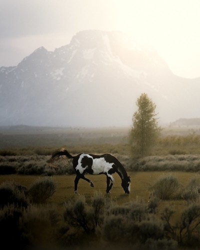 American Paint Horse in the Tetons