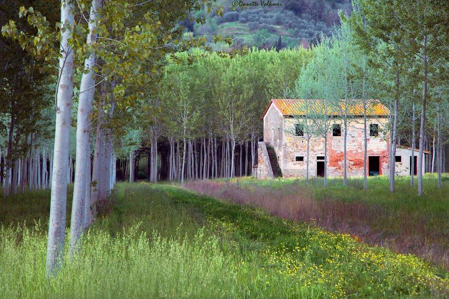Tuscan Springtime