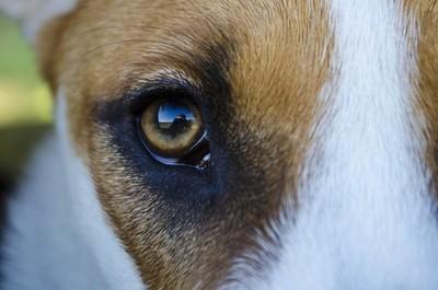 Selfie in impatient dogs eye