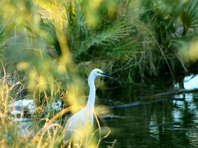 bird in the pond