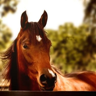 Bay Mare NW