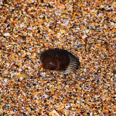 Brown Shell NW