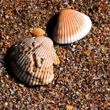 Fossils and Shells NW