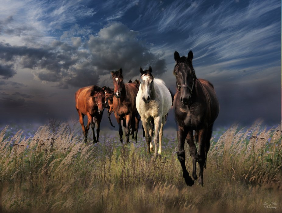 Horses in the meadow-3