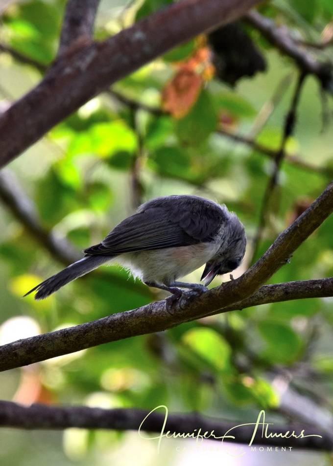 Bird With Bowed Head