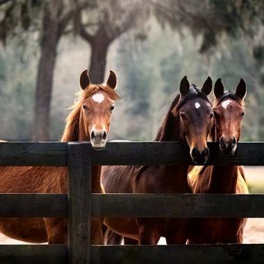 Three Amigos NW