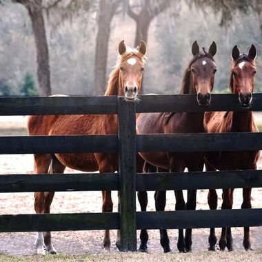 Three Amigos Gathering NW