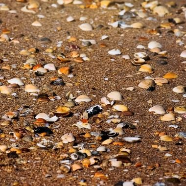 How Many Shells Can You Pick Up NW
