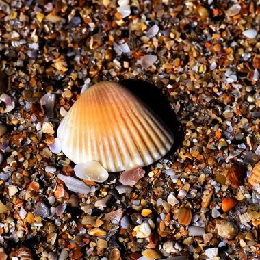 Shell on Shells NW