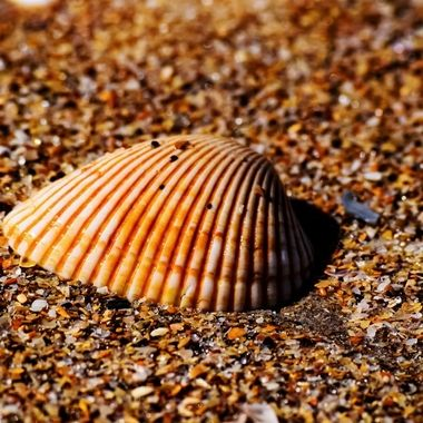 Beauty of a Shell NW