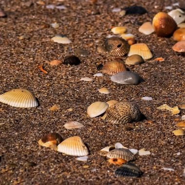 Shells at NSB NW