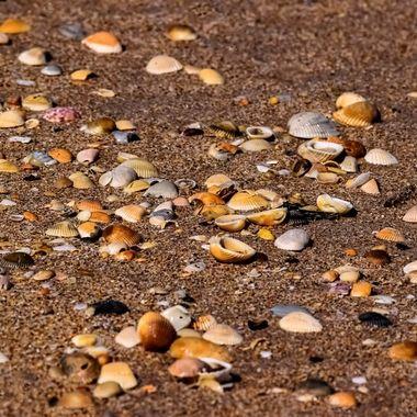Many Shells NW