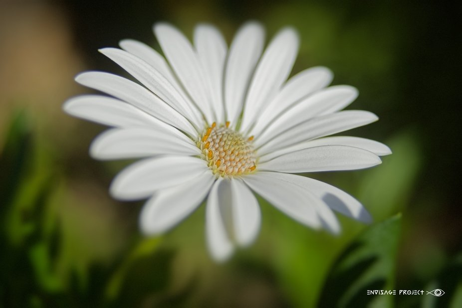White Profiled | Thank you one and all, for your kind votes and comments all of which, are very m...
