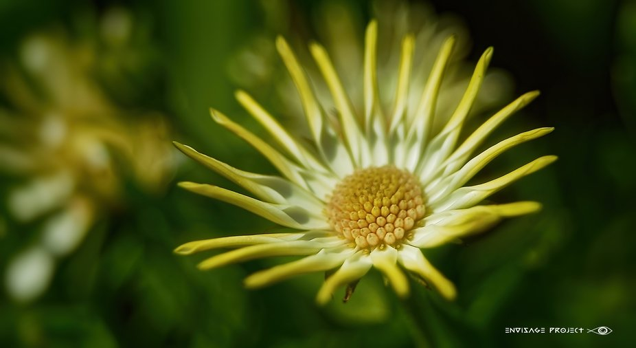 A Tale Unfurling | Thank you one and all, for your kind votes and comments all of which, are very...