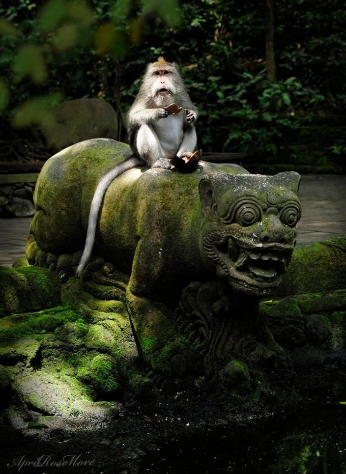 """Monkey Riding Tiger"" by AprilRoseMore"