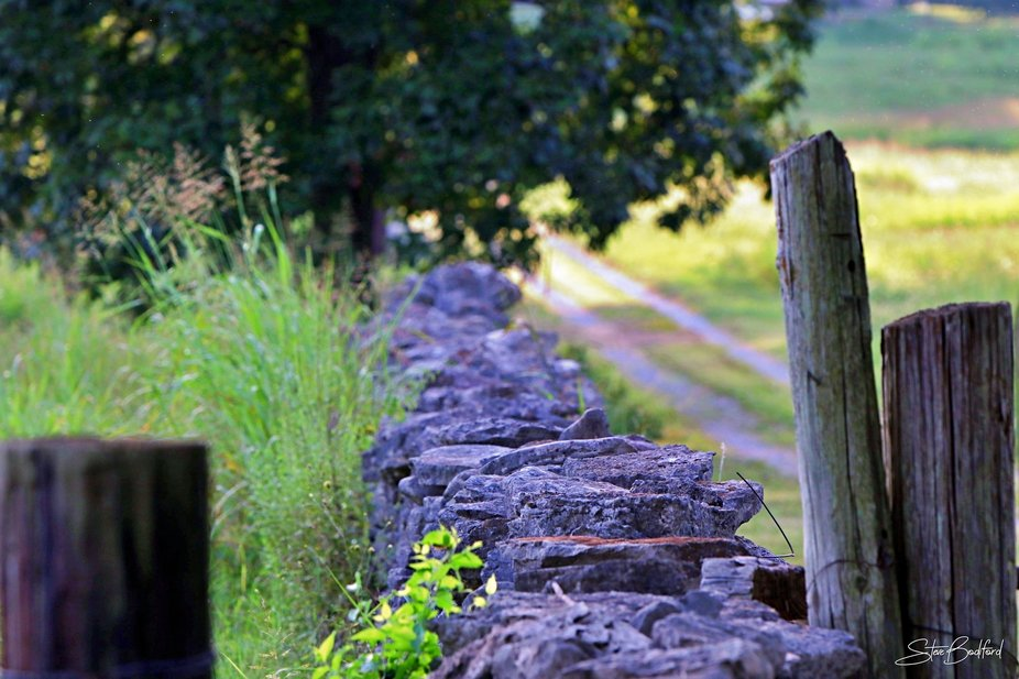 Old Fence Rows