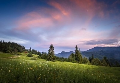 Meadow at the sunset