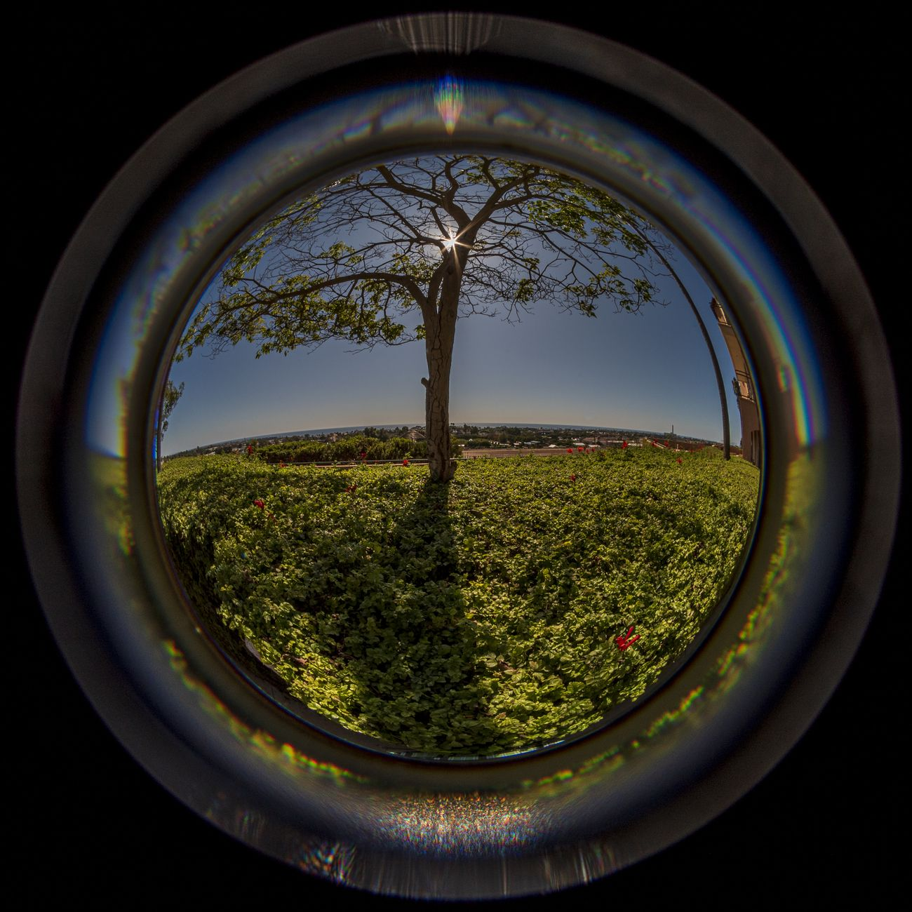 Fisheye view of tree and bushes with sun rays