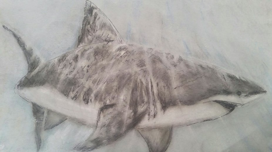 shark, greatwhiteshark,sealife,realistiicdrawing,art, pastelart, drawing, water, reflections ,sha...
