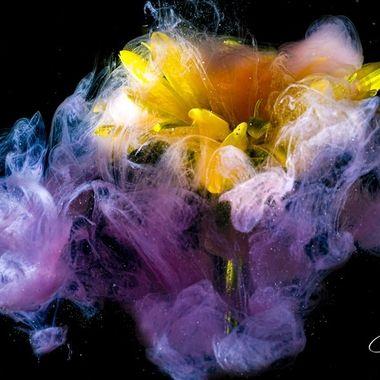 Flowers & Ink