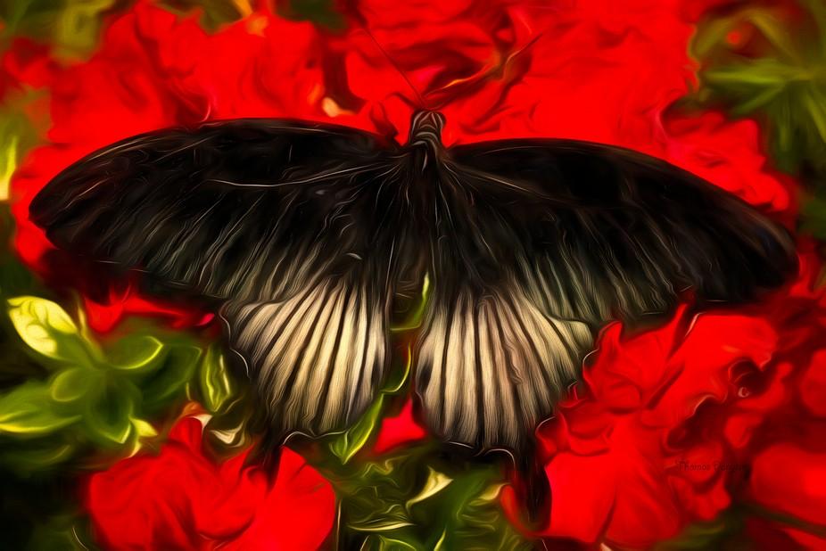 Butterflies 057A