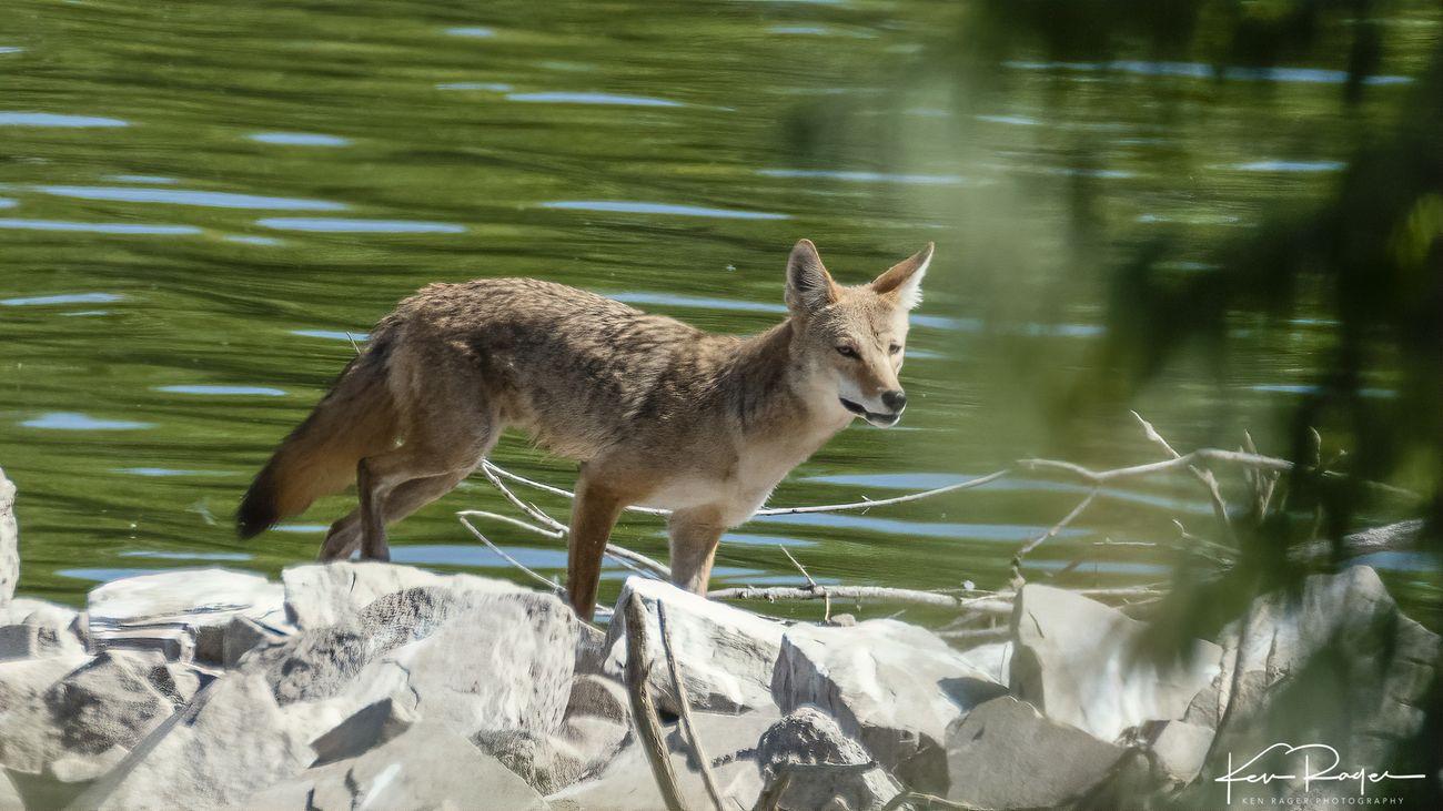 Wile E Coyote Returns-10