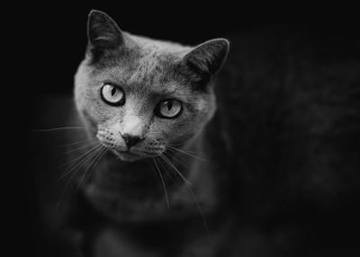 Pretty Kitty In Monochrome