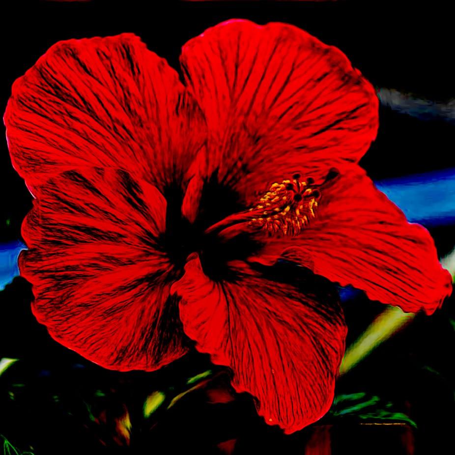 Hibiscus Oily Arts