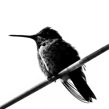 This Hummingbird was so relaxed and wouldn't budge