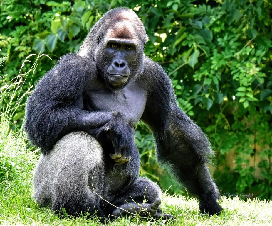 King Kong2