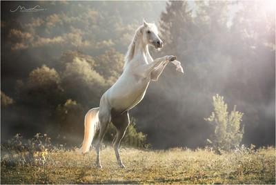 """""""Arabian Morning"""""""