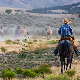 Discovering the cowboy way in Utah. Hard working cowboys round up horses in the countryside.