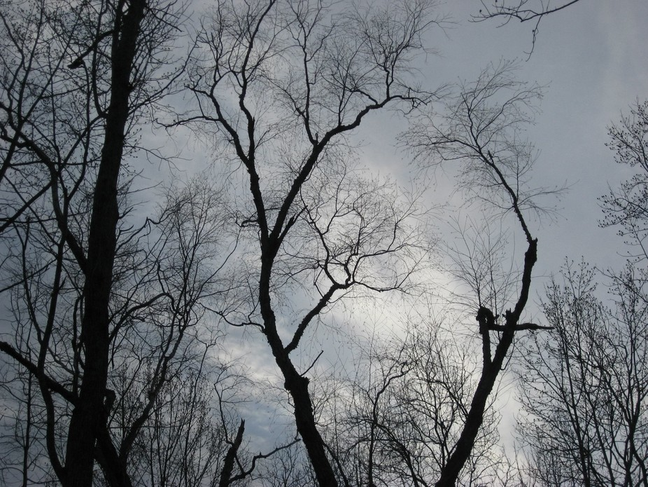 Trees in Winter #2