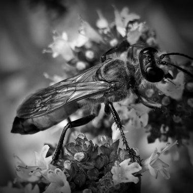 Bugs and other insects in black and white