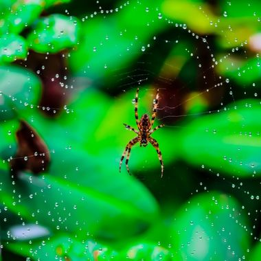 Beautiful droplets clinging on to the web