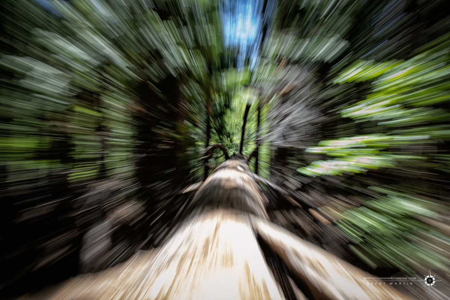 Who knew a redwood tree could travel this fast?!