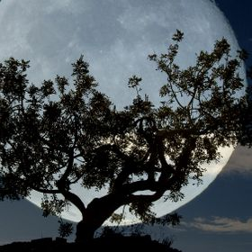 Mountainside tree with full moon.