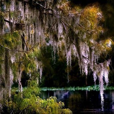 Swamp Life NW