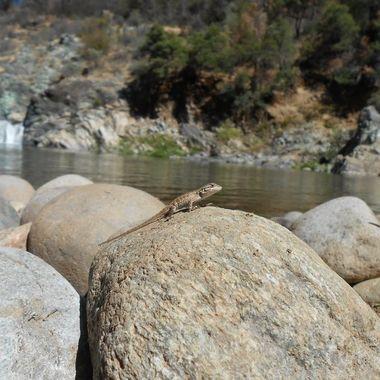 Lizard River